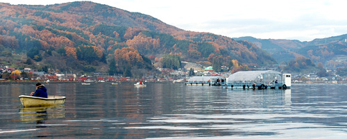 諏訪湖のワカサギ釣り